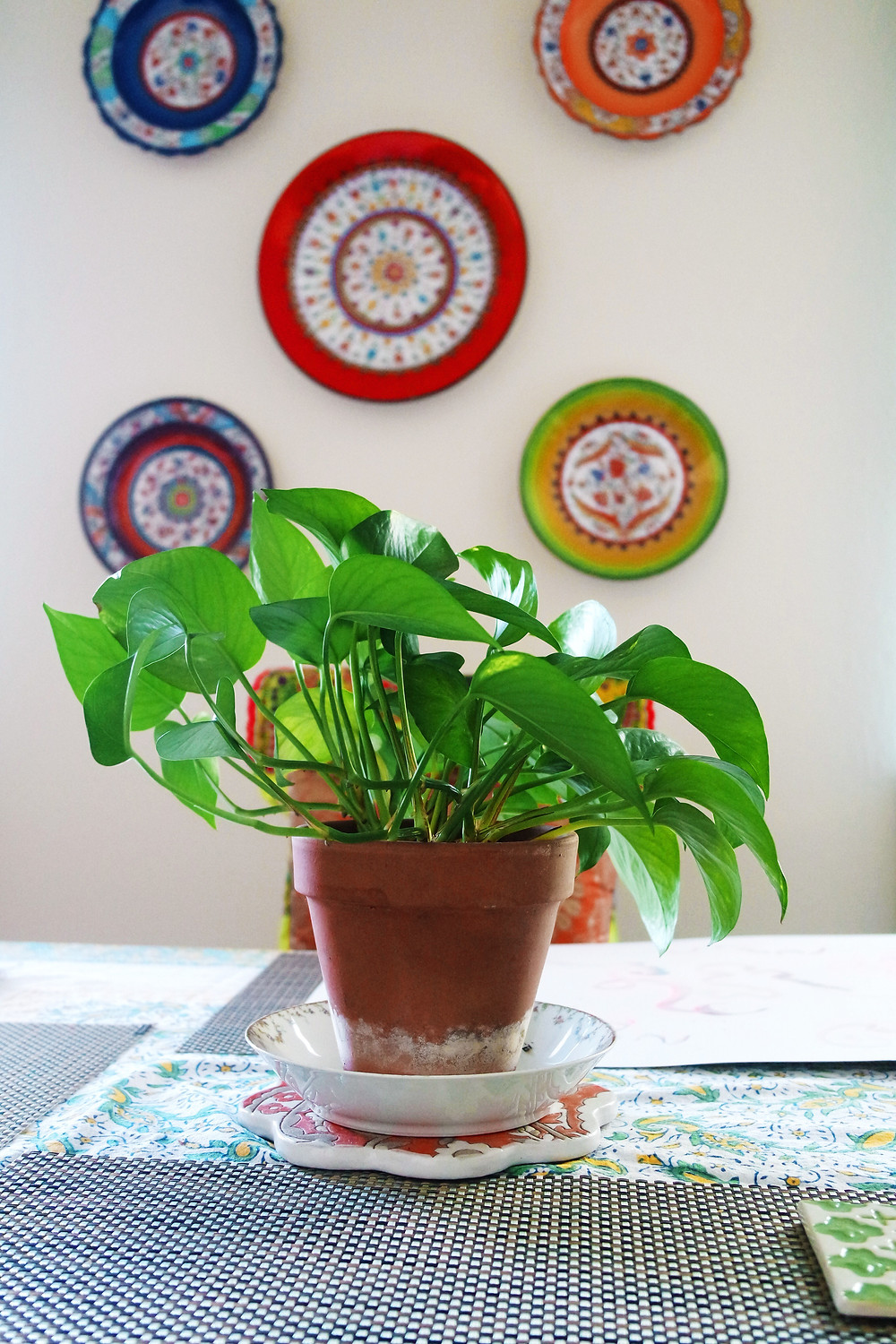 Pothos Plant in terracotta pot on table with 5 colorful turkish plates on the wall behind it.