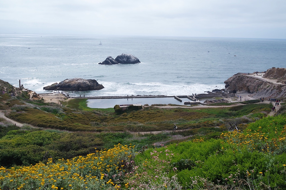 A view of the Pacific Ocean from the top of the cliffs overlooking the Sutro Baths ruins in San Francisco. The ruins are in the middle of the photo - a large rectangular pool with smaller square pools on its right. The cliff is covered in greenery and in the foreground lots of yellow flowers.