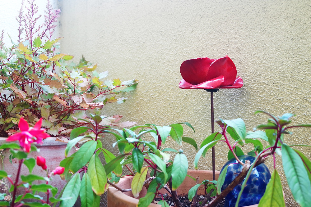 A red, ceramic poppy sitting a pot with a fuchsia in the corner of a garden.