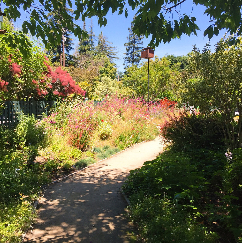View of a path with a flower border with lots of green and pink, leading from the shade into the sun at Gamble Gardens.