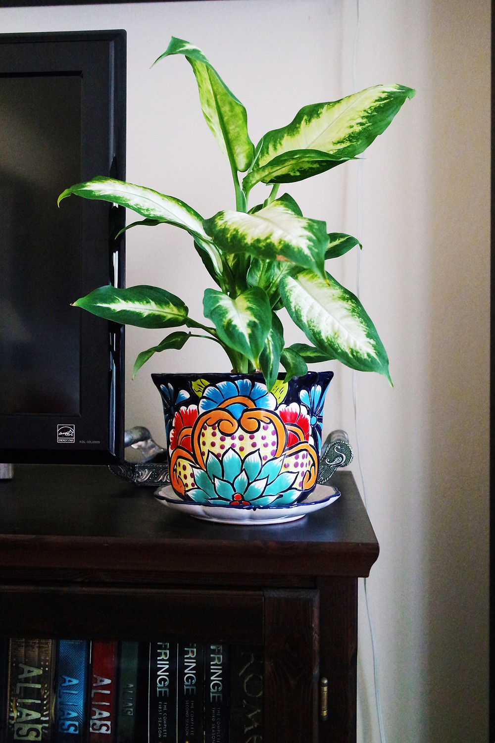 Diffenbachia Plant in a colorful painted pot sitting on the corner of a wooden TV stand.