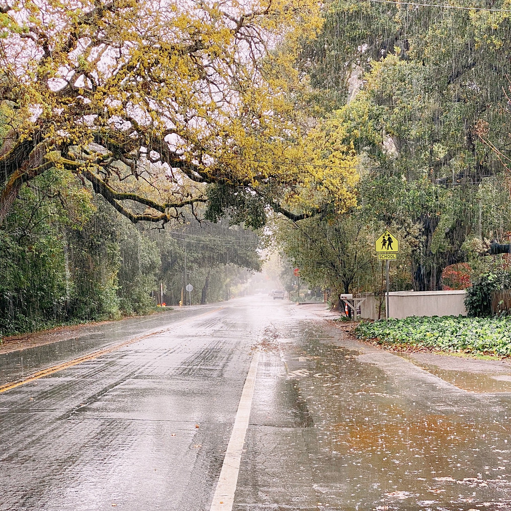 View of a two lane road with a bike lane on either side, with oak trees flush with spring growth overhanging it, in the rain.