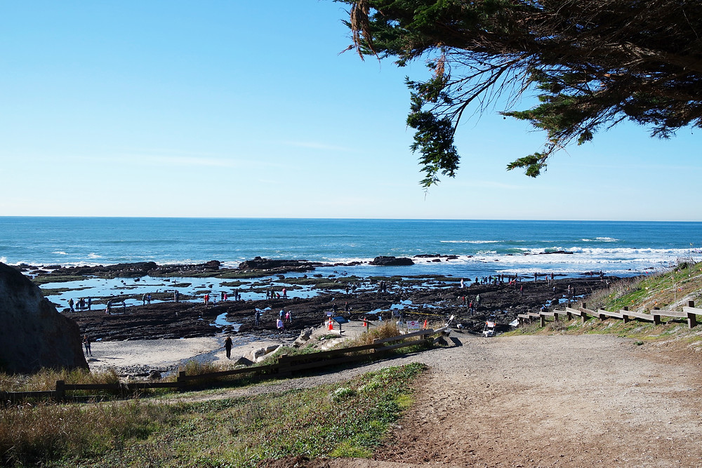 View of the beach and tide pools from the entrance of the Fitzgerald Marine Preserve in Moss Beach, California.