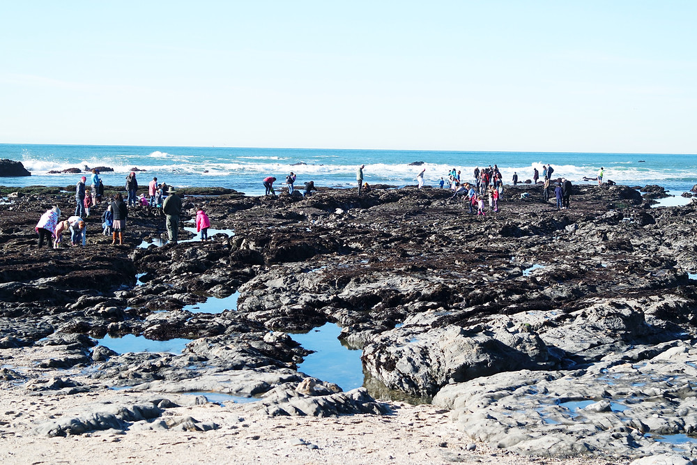 The tide pools at Fitzgerald Marine Reserve, people on the rocks looking into the tide pools and the ocean behind.