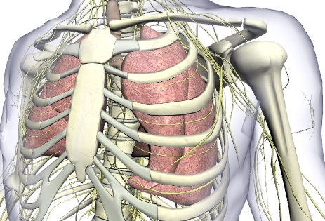Ressources en Anatomie