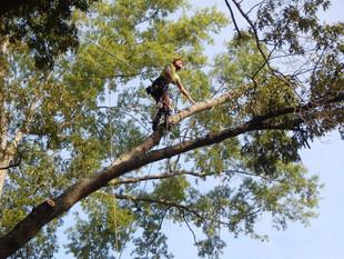 Williamsburg Tree Trimming | Yorktown Tree Trimming