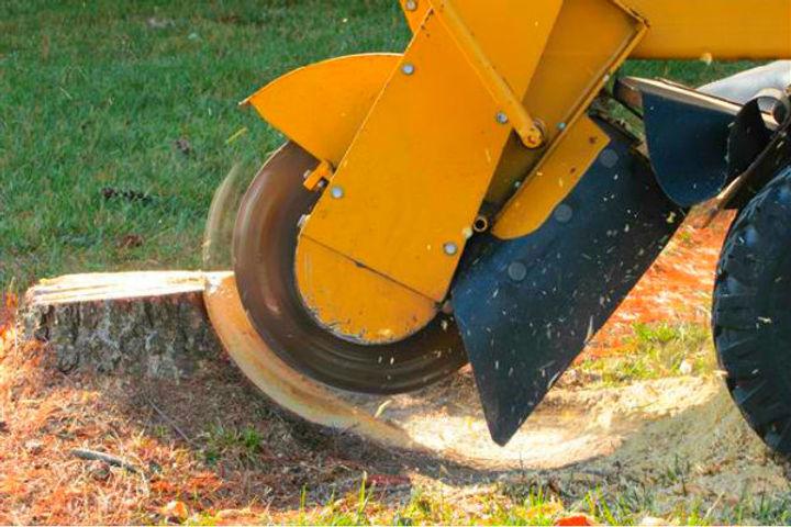 Williamsburg Stump Grinding | Yorktown Stump Grinding