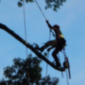Williamsburg Tree Removal | Yorktown Tree Removal