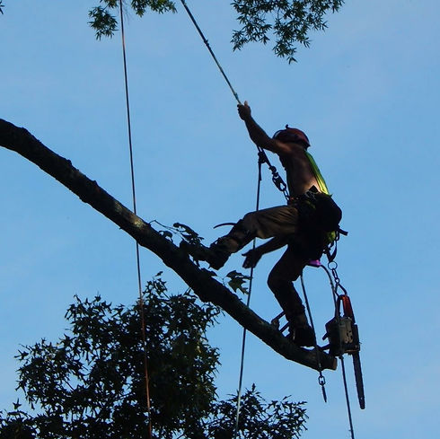 Williamsburg Tree Removal | Yorktown Tree Removal