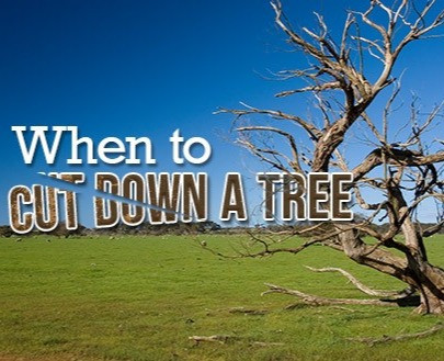 When Should I Cut Down My Tree?