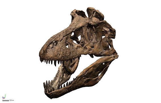 T-Rex ISO colour.jpg