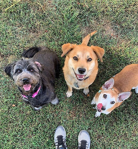 Happy Wednesday from Sheeba, Ivy, and Ra