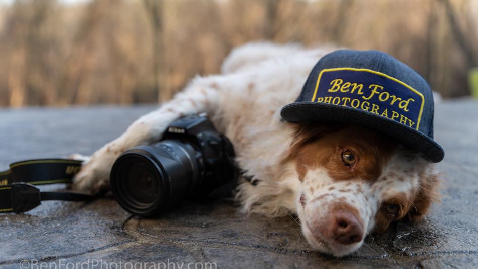 Dog Photographer BenFordPhotography.com.jpg