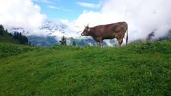 auf der Alpe
