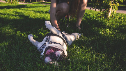 There's No Place Like Home: 8 Reasons Why In-Home Pet Care Beats Kennel Competition