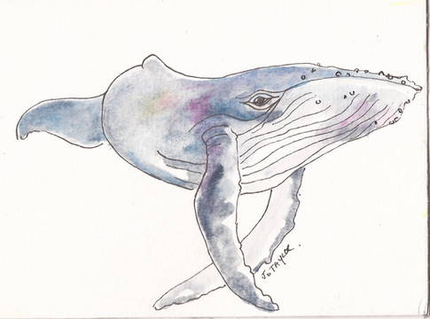 Inspirational whales