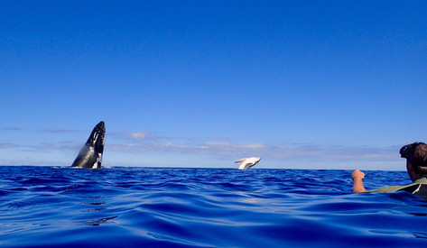 Mother and calf breaching