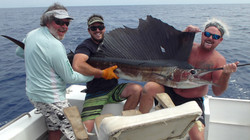 Tag and release sail fish