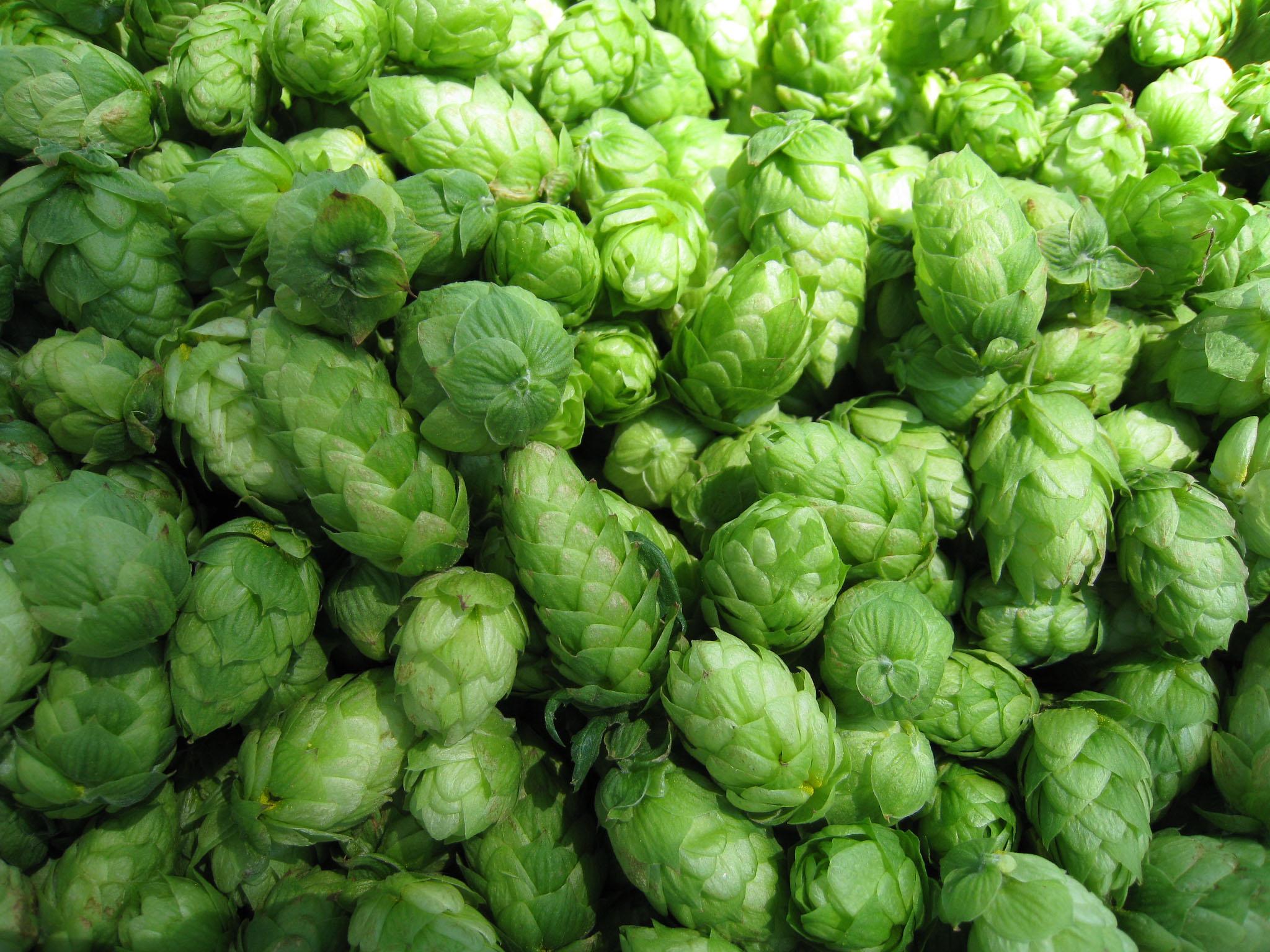 hops bulk.jpg