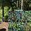 Thumbnail: Jess's Garden