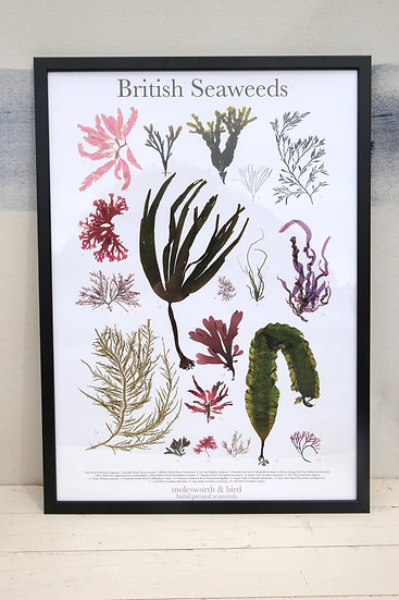 Seaweed Print Poster