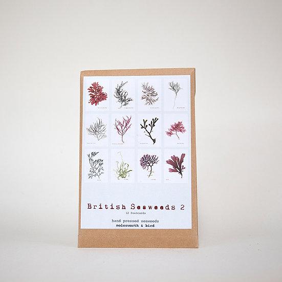 Seaweed Postcard Set 2