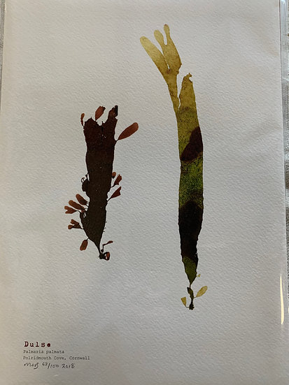 Molesworth & Bird Pressed Seaweed A4 Print