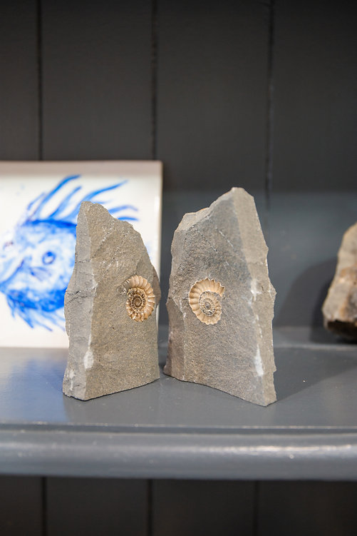 The Fossil Shop8.jpg