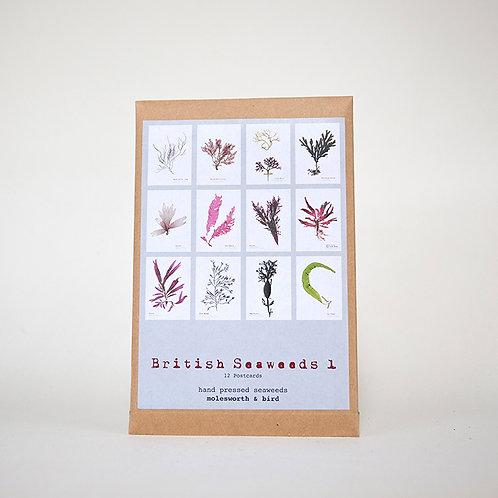 British Seaweed Postcards - Pack 1 & 2