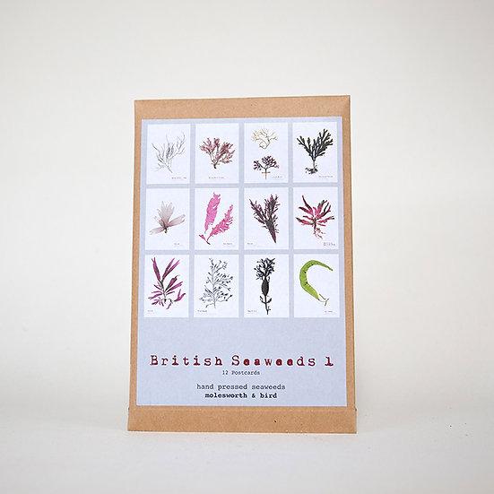 Seaweed Postcard Set 1