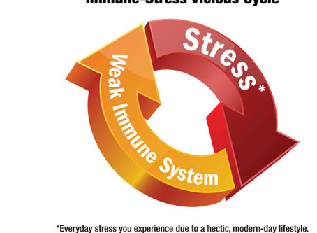 Immune System and How Yoga Benefits the Immune System/Stress