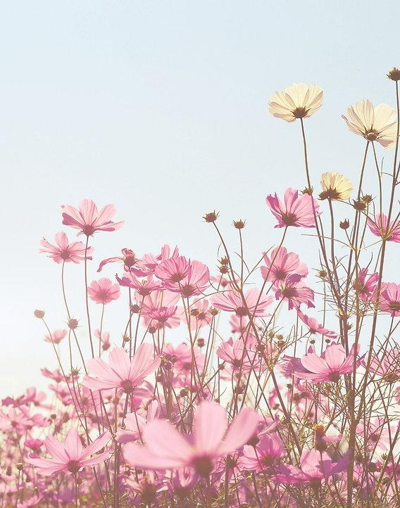 gog flower_edited_edited.jpg
