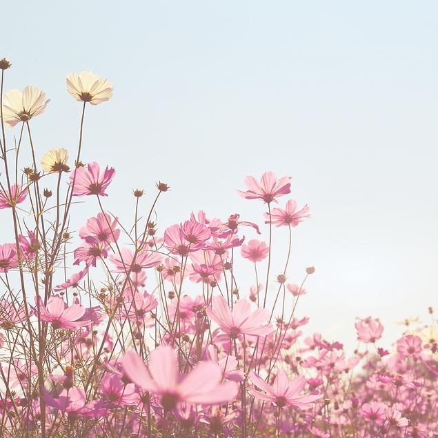 gog flower.png