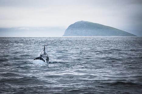 Arctic Dolphin & Håja