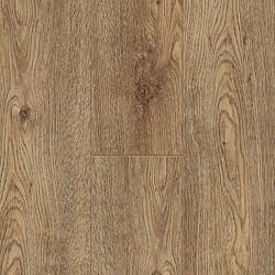 60136 Himalaya Oak