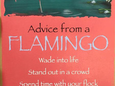 Advice from a Flamingo..