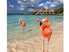 #FlamingoFriday