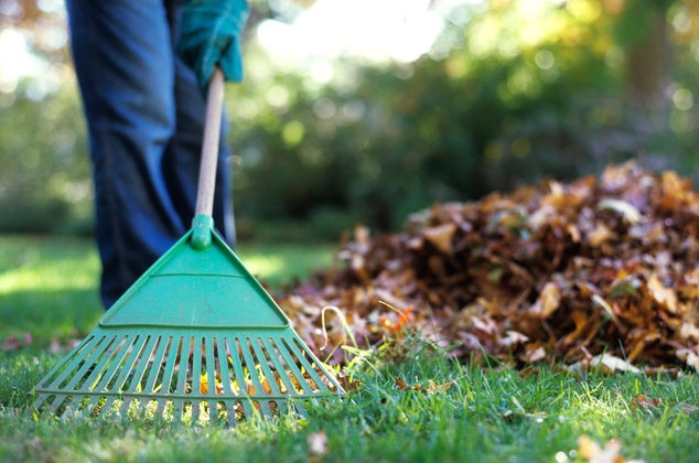 Spring & Fall Cleanups