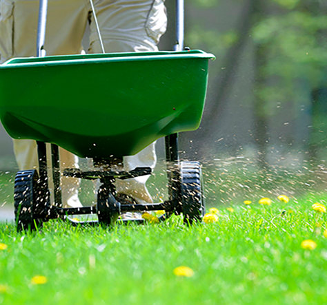 Lawn Fertilization | Weed Control | Grub and Insect Control