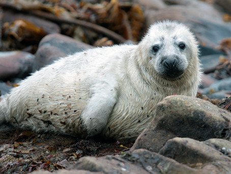 The Do's and Don'ts of Seal-Spotting Along the English Coast