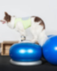 dog engaged in fitness.jpg