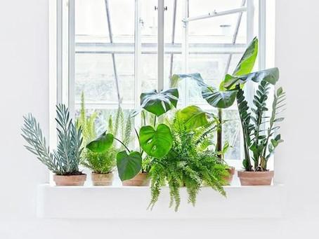 Plantas para se ter dentro de casa ou apartamento