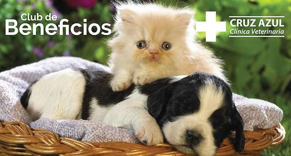 veterinaria-en-las-condes.jpg