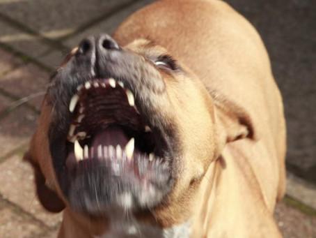¿Los cachorros destetados antes de los 2 meses son más agresivos?