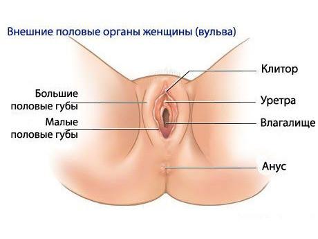 Источник: https://devochki.guru/uhodzatelom/formy-i-vidy-zhenskih-polovyh-gub.html