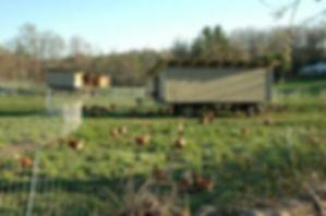 chicken_wagon.jpg