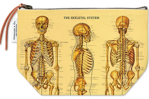 Skeletal System Pouch