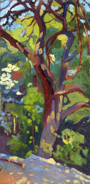 1backyard+tree+email