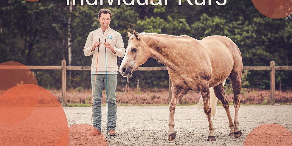 Tao to Horses - Individualkurs