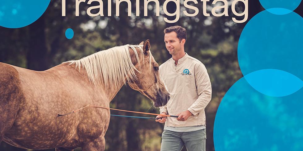 Tao to Horses - Trainingstag